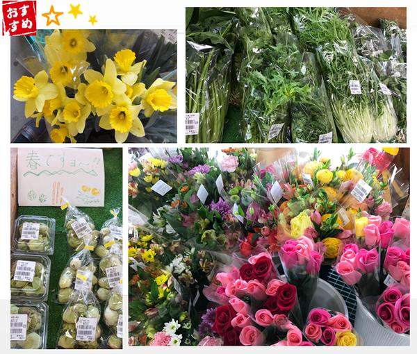 水仙フキノトウ水菜、花.png