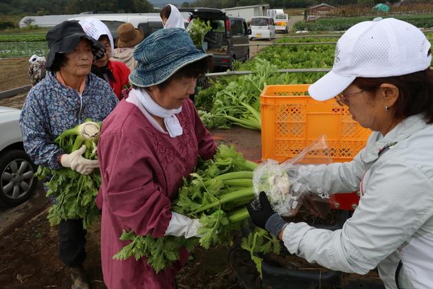 女性大学院セルリー収穫体験.JPG
