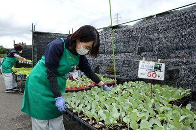 JAファーム秋野菜苗販売         日本農業新聞.jpg