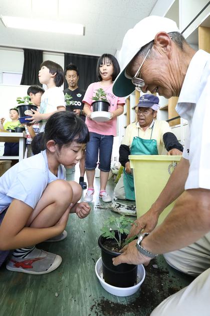 20180717_金沢小学校菊づくり.JPG