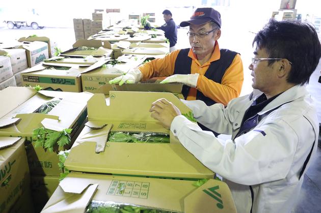 セルリー包装資材材質検討.JPG